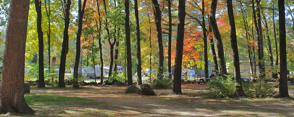 Artistic shot of campsites in the woods